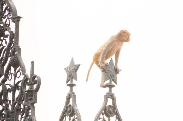 Affen im Regierungsviertel