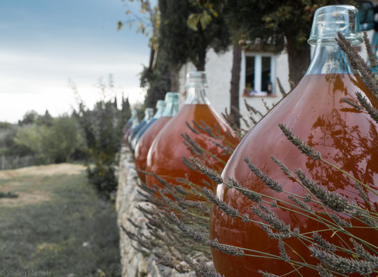 Besuch eines Weingutes mit biologisch angebauten Weinen.