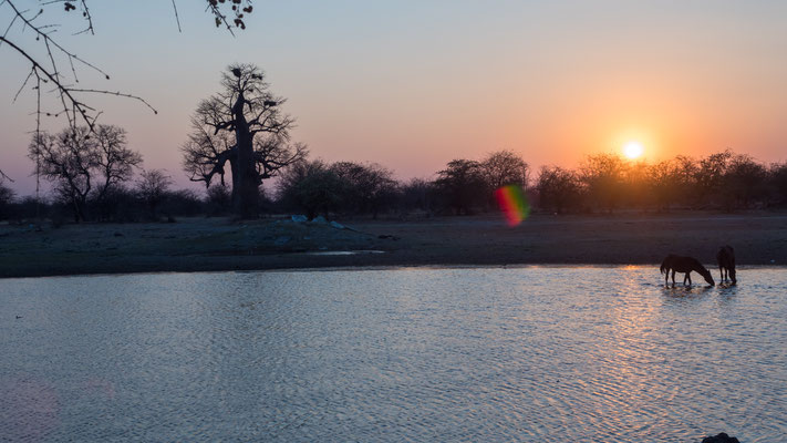 Im Okavango-Delta.