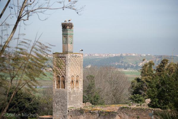 Rabat- Die Chellah - die merinische Totenstadt.
