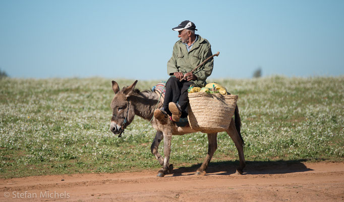 Auf dem Weg nach Meknes.