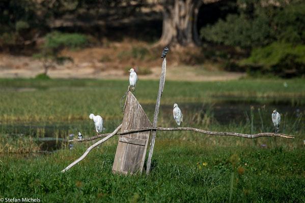 Die Stelle des heutigen Awassa dürfte ursprünglich dicht bewaldet gewesen sein.