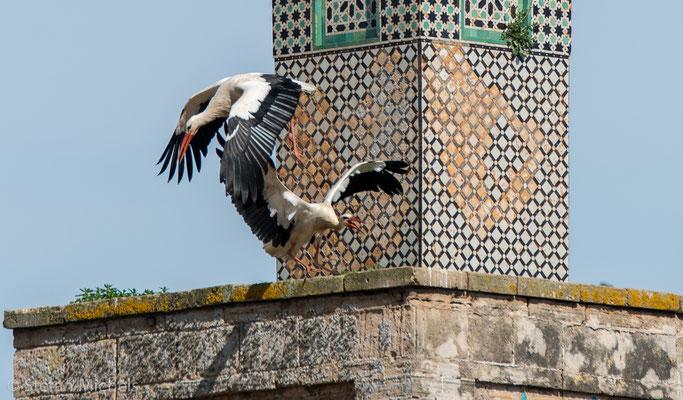 Rabat- Die Chellah - beinhaltete auch eine Madrasa ( Ort des Studiums).