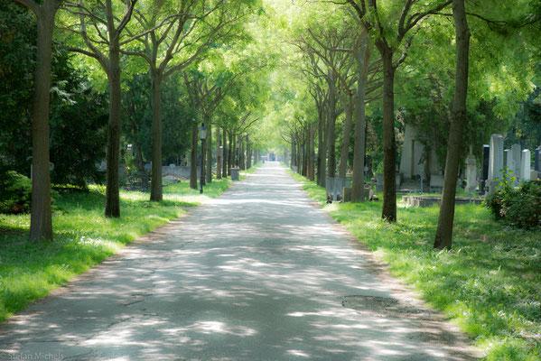 Der Wiener Zentralfriedhof wurde 1874 eröffnet und zählt mit einer Fläche von fast 2,5 km² und rund 330.000 Grabstellen zu den größten Friedhofsanlagen Europas.