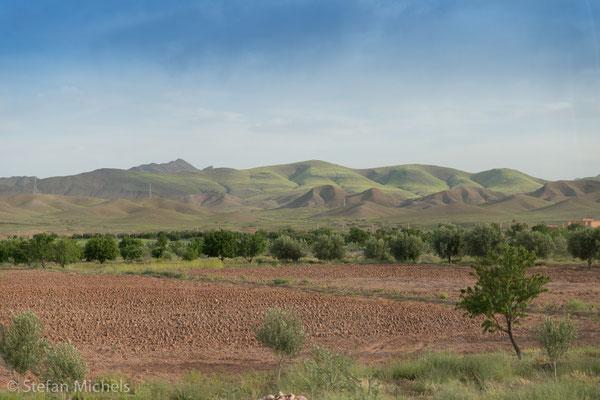 Oasen -In der zweiten Ebene dominieren niedrige Baumkulturen wie Feigen und Granatäpfel, während die dritte  Ebene durch die Dattelpalmen gebildet werden