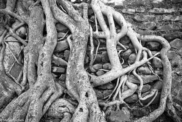Das Bad des Fasilidas, ein mit Ficusbäumen gesäumtes Bassin.