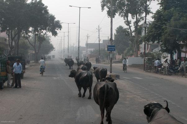 Straßenszene auf dem Weg nach Fatehpur Sikri, der ehemaligen Hauptstadt des Mogulreiches