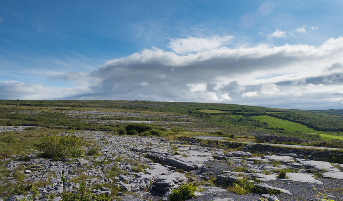 Aufgrund des Klimas und der Beschaffenheit des Burren findet man hier eine Vielfalt von seltenen Pflanzen und Blumen.