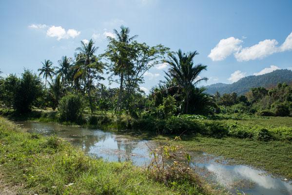 """Im Gegensatz zur Ostküste Malaysias gibt es aber keine """"echte"""" Regenzeit. Die feuchteste Saison liegt in der Zeit zwischen August und November."""