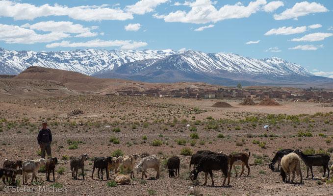 Schaf- und Ziegenzucht in kleinen Herden.