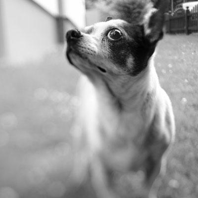 Hundeportät II
