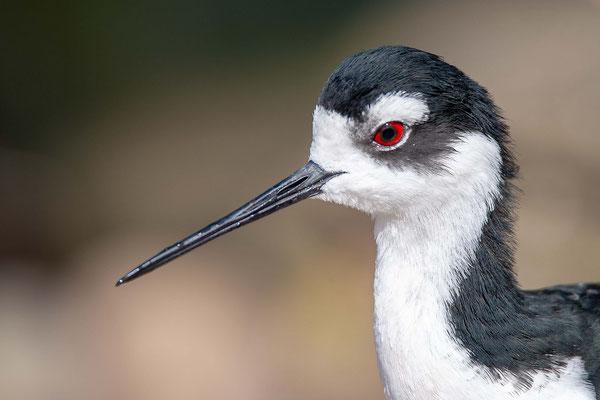 Bird - Landau
