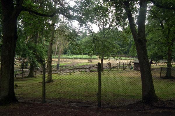Wildpark Saarbrücken Wisentgehege