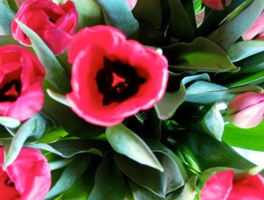 Blumen in Frühling Sipplingen Bodensee
