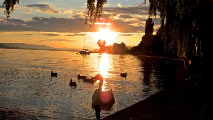 Sonnenuntergang Sommer Sipplingen Bodensee