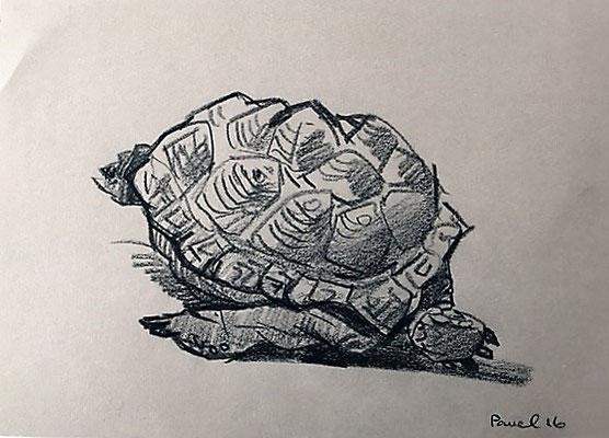 Pavel Feinstein: *Schildkröte*, 2016, Skizze/Papier, 21 x 30 cm