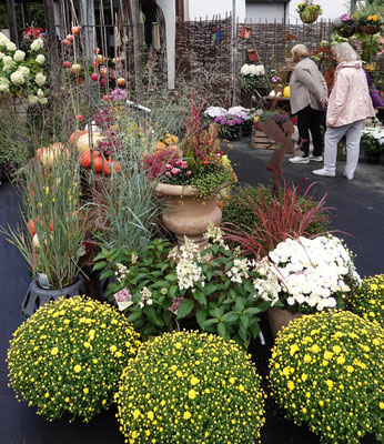 Gelbe Blütenpracht beim Herbstmarkt im Pflanzenhof