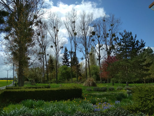 Vue sur une partie du jardin