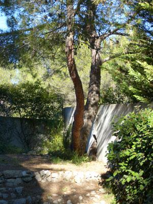 le jardin vue sur la forêt
