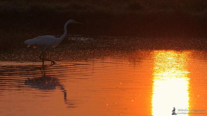 Bianco all'alba (isola della Cona)