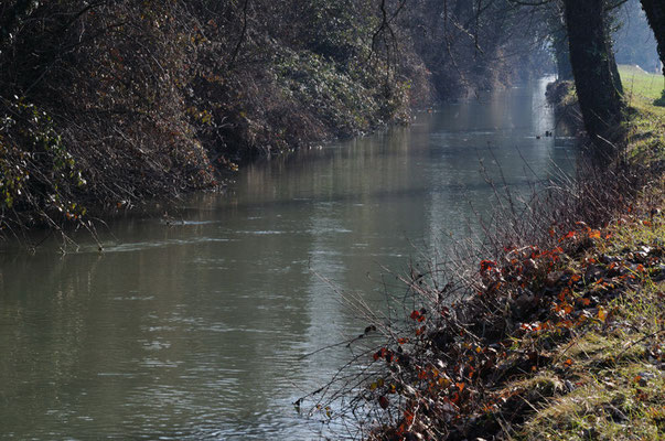 Roggia nei pressi del canale Muzza