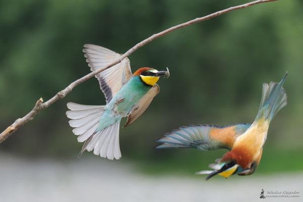 Arcobaleno volante (Parco Adda sud)