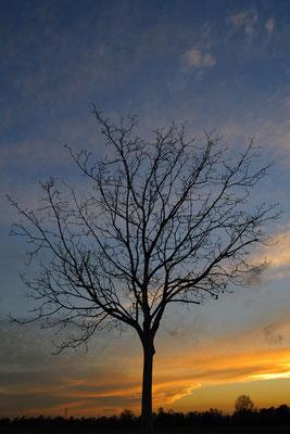 Albero al tramonto (Sorgenti della Muzzetta)