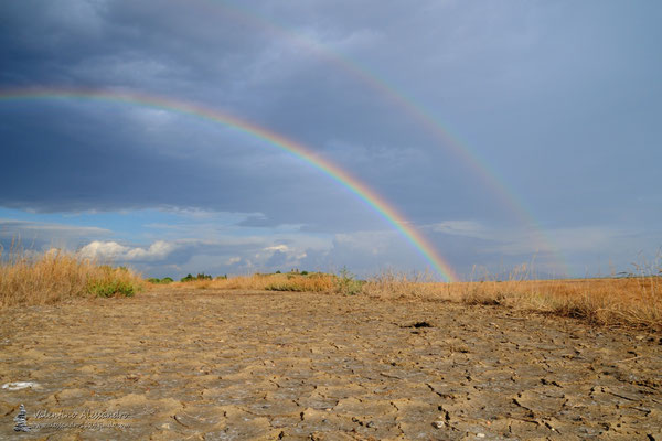 Arcobaleno alla Diaccia Botrona (Castiglione della Pescaia)