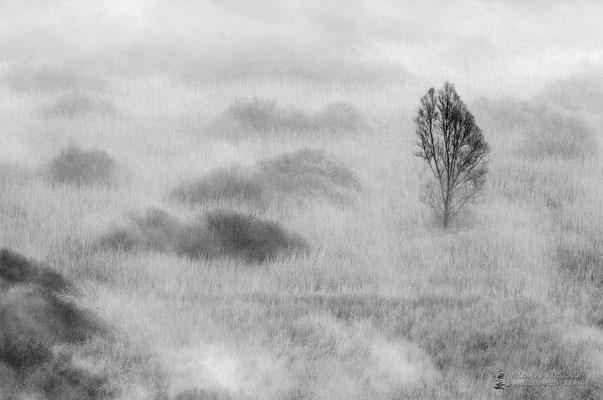 L'albero della palude (Paludi di Brivio)
