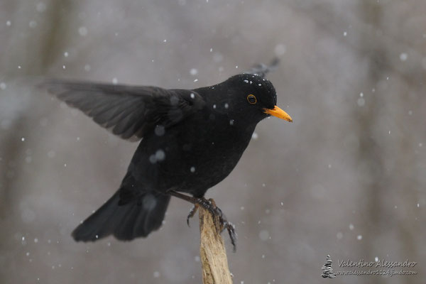 In equilibrio sotto la neve (Merlo, Lainate)
