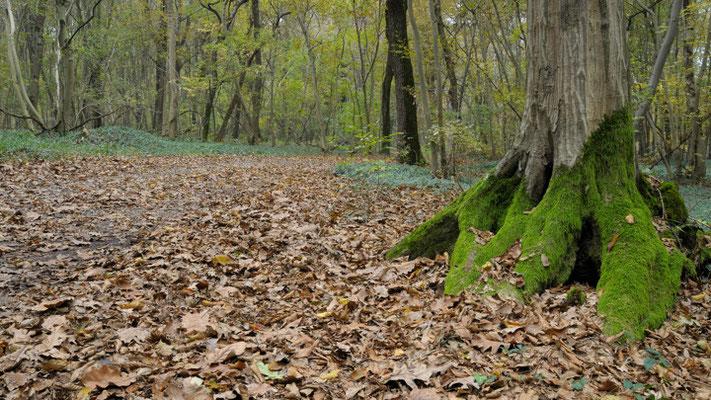 Autunno nei boschi (parco del Ticino)