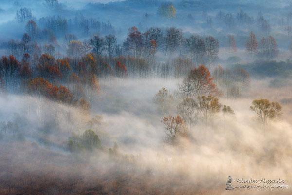 Alberi nelle nebbie mattutine (Paludi di Brivio)