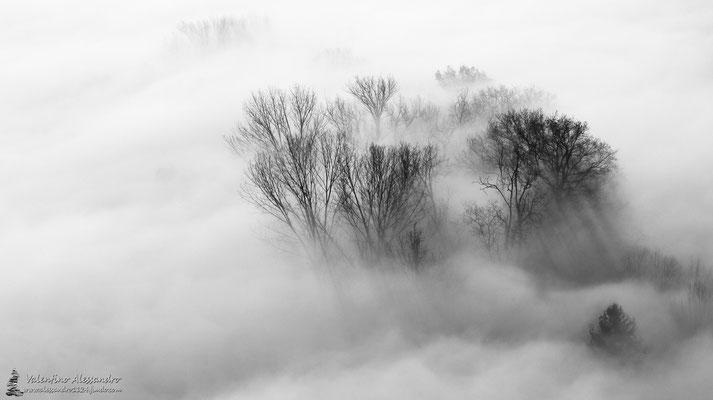nebbia (Montevecchia)