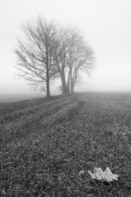 Campi nella nebbia ( Sorgenti della Muzzetta, >Dicembre 2015)