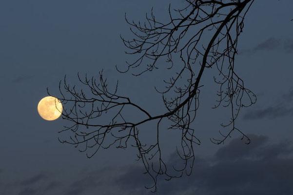 Carezza alla luna