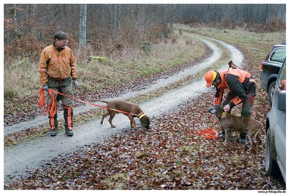 Nach Auskunft des Jägers, welcher das Schwein beschossen hatte, handelte es sich um einen größeren Frischling. Da ein weiterer Hundeführer assistierend zur Verfügung stand, konnten 2 Schweißhunde auf die Wundfährte angesetzt werden.
