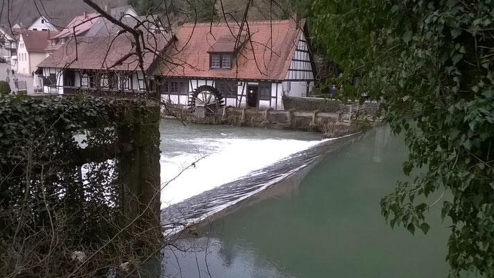 Blautopf Blaubeuren endlich wieder viel Wasser 03. März 2019 Pegelstand 62 cm