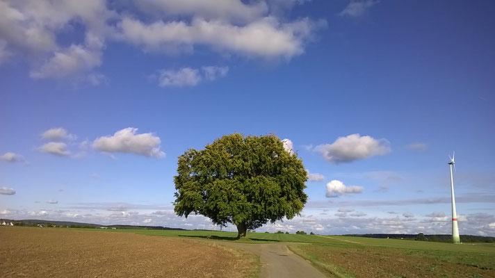 Baum zwischen Berghülen und Wennenden