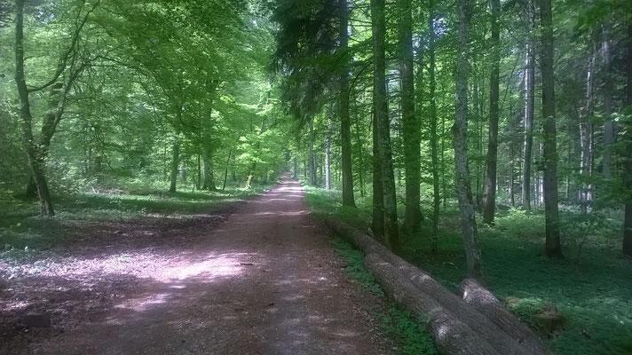 Waldweg bei Laichingen