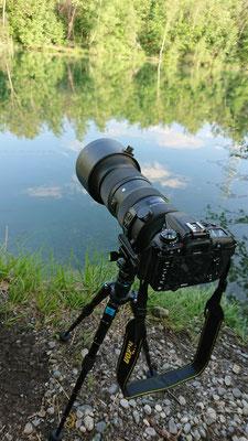 Nikon D7500 + Sigma 60-600mm