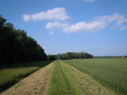 Auf dem Weg über den damm zum Auhof!