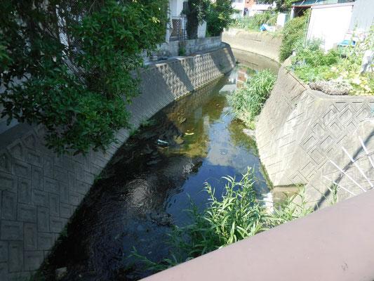 五反田橋から上流。