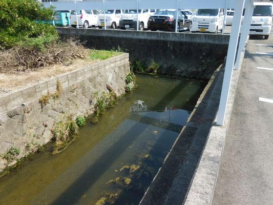 愛媛県が管理する久万川の起点、下流側から撮影。衣山1丁目大倉ガラスの北側。