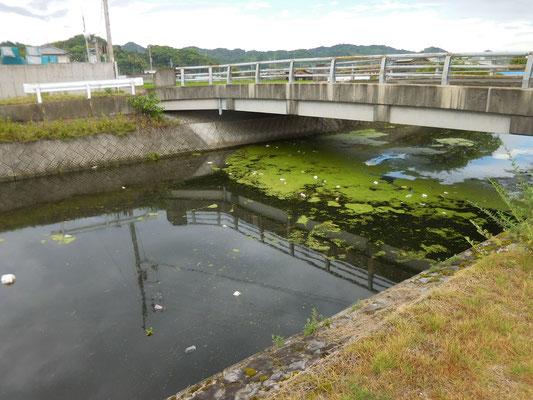 井関橋付近