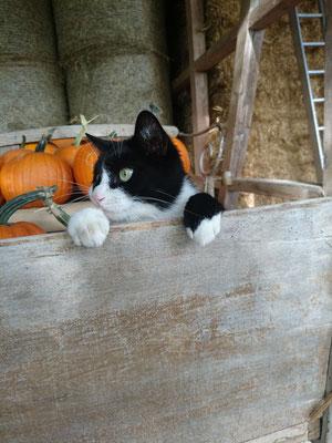 Impressionen unserer Tiere - Jordi-Hof Bewirtung und Übernachtung auf dem Bauernhof in Ochlenberg