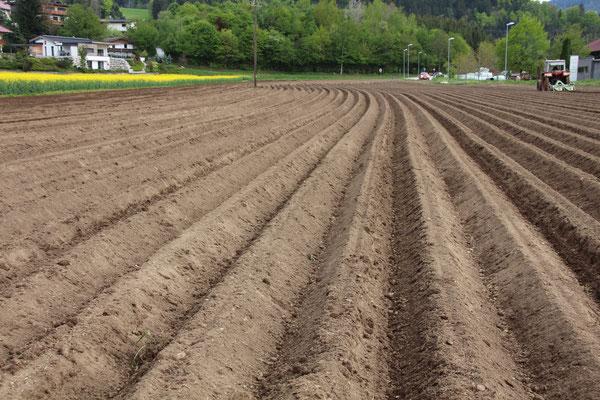 Kartoffelfeld Dammformen Mai 2019