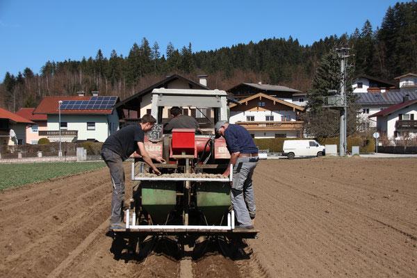 Frühkartoffeln legen März 2021