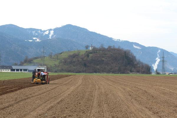 Kartoffeln setzten März 2016