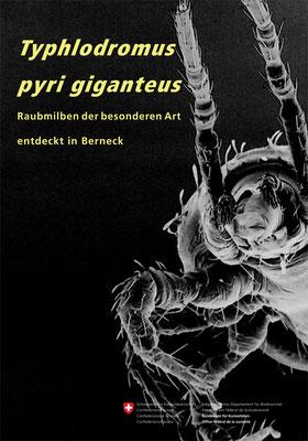 Typhlodromus pyri giganteus, 2014