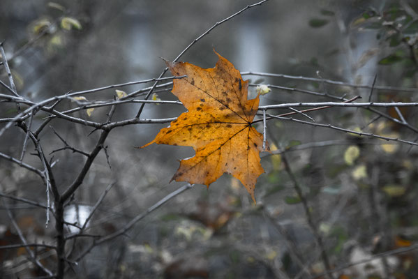 November 6 by Marcel Haag